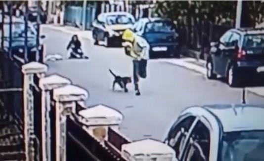Ladrón y perro