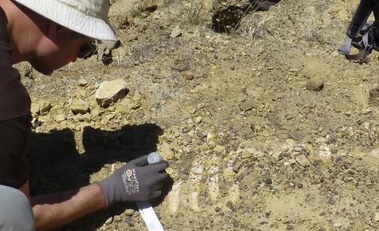 Fósil de Manatí