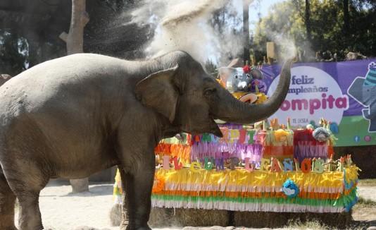 Elefanta trompita