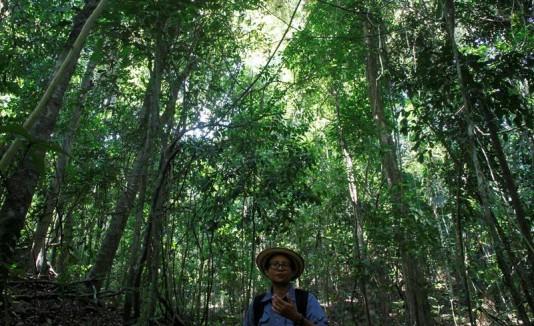 Selva panameña