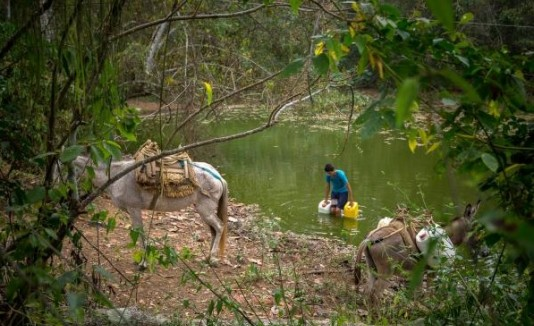 Bosque seco Colombia