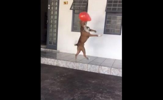 Perro ronaldo