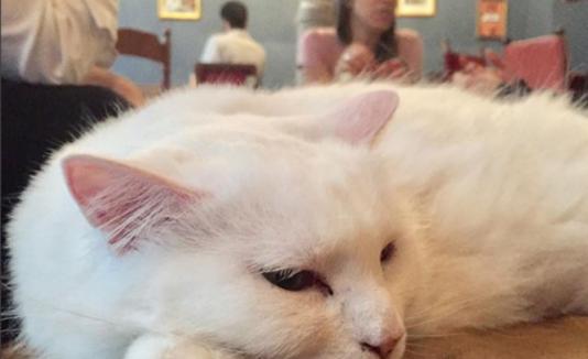 Gatos cafetería