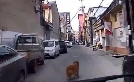 Perro ambulancia