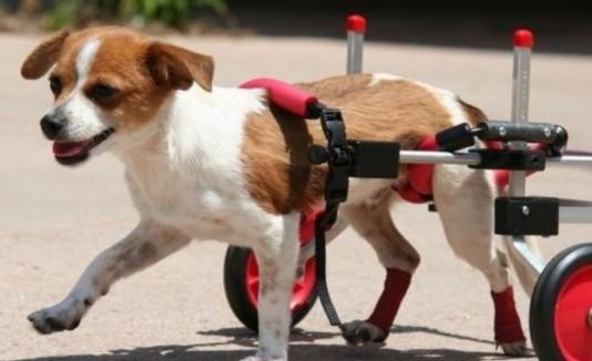 Perros sillas de ruedas