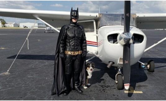 Batman Perros