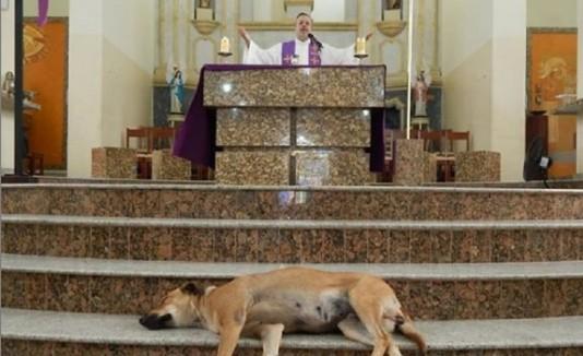 El padre João está convencido que los perros callejeros tienen todo el derecho cristiano de estar presentes en su iglesia y asistir a sus misas. (Instagram)