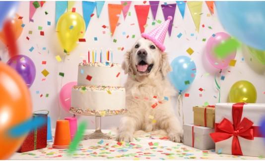 Perro calcular edad
