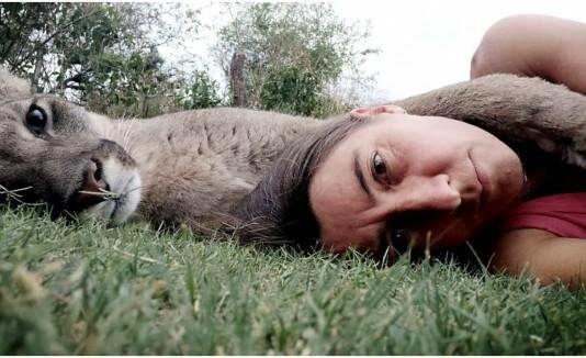 Puma ciego