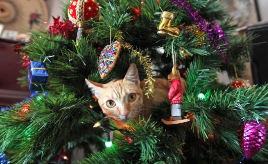 Navidad y los animales