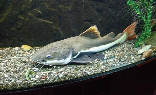 el pez se estampó contra el parabrisas de su automóvil, en la parte del copiloto o acompañante.