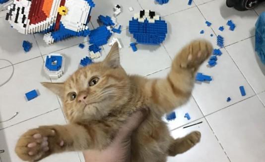 Gato destruye Lego