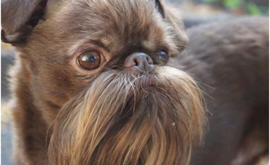 perro con bigote