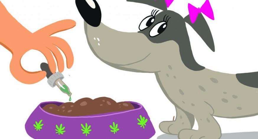 Cannabis para mascotas