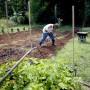 La finca, ubicada en el barrio Camaseyes de Aguadilla, está compuesta por cuatro cuerdas de terreno donde los participantes tienes sus responsabilidades para hacer crecer la cosecha.