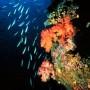 Los biólogos aseguran que los peces procedentes de Japón representan poco peligro.