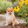 Los perros consideran un rostro sonriente como positivo.