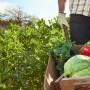 El público se divertirá pero también,   recibirá herramientas para desarrollar su empresa agrícola.