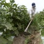 Los agricultores de pueblos declarados en emergencia podrán solicitar.