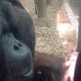 Rasang besa a mujer embarazada