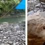 Los comentarios del vídeo se plantearon diferentes versiones sobre qué tipo de animal son