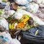 Se teme un aumento drástico en el volumen de alimento desperdiciado.