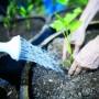 El donativo de Nature Valley será destinado a la siembra de árboles y plantas en Luquillo y Fajardo.