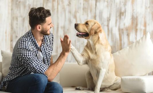 Cinco cosas que los perros y los humanos comparten